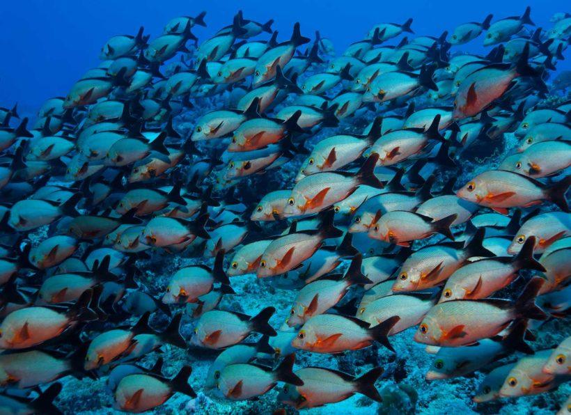www.unterwasserfotografie.de / Udo Kefrig