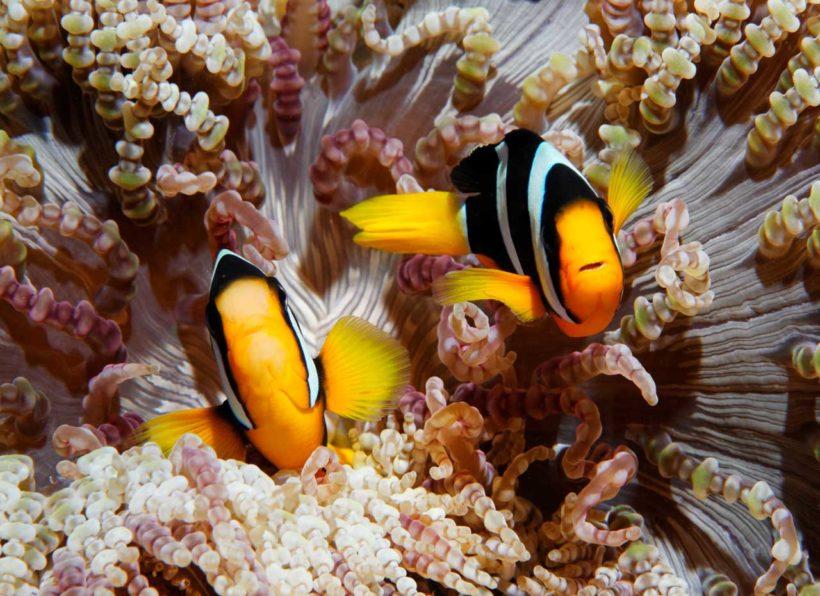 ©www.unterwasserfotografie.de / Udo Kefrig
