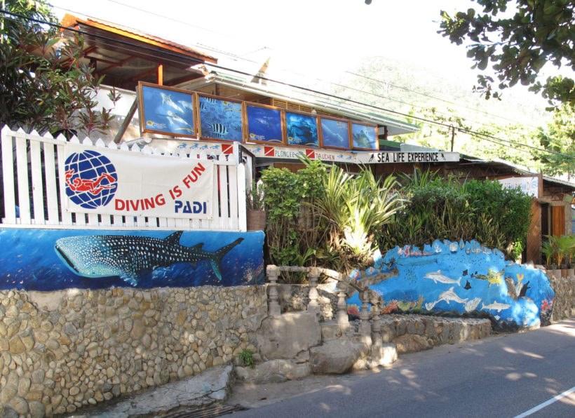 Ocean Dream Divers