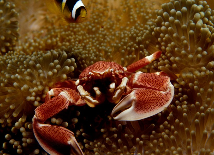 Octopus Divers Seychelles
