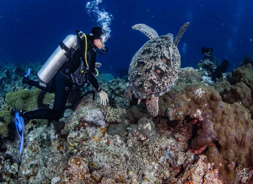 Amertha Karang Divers
