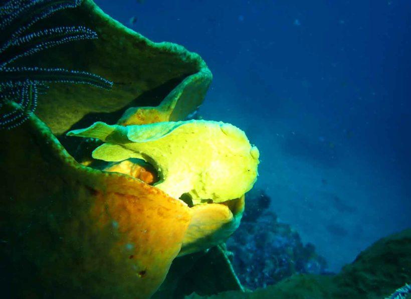 IGangga Divers Gangga Island