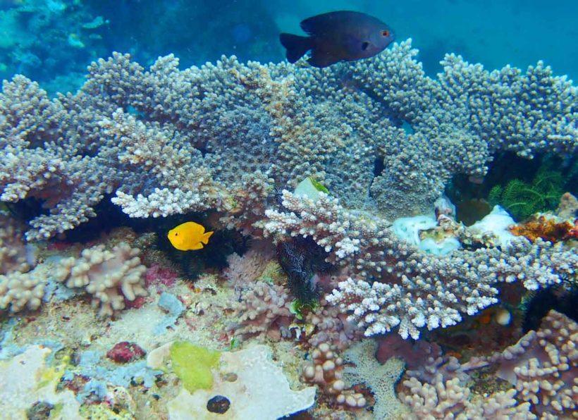 Bangka Diving