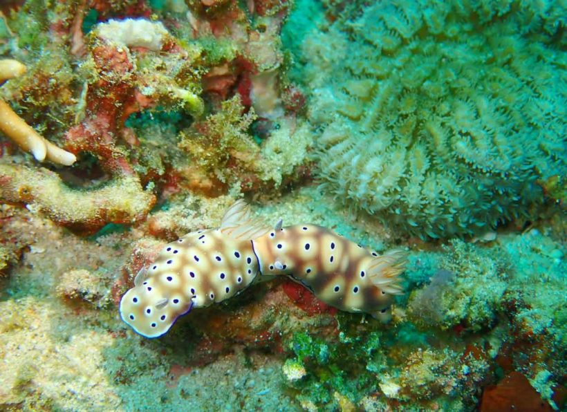 Gangga Divers Gangga Island