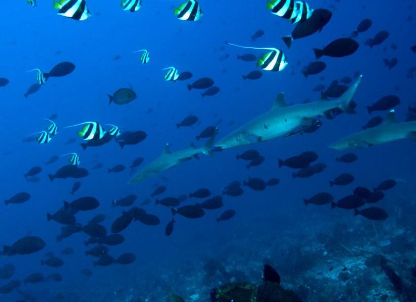 Komodo Dive Club