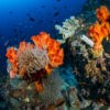 Lembeh Diving Center