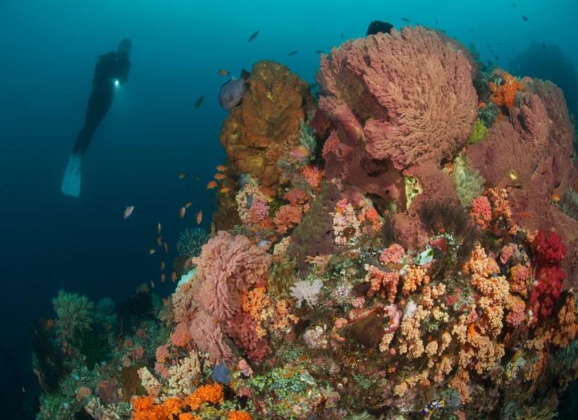 Murex Bangka Diving Center