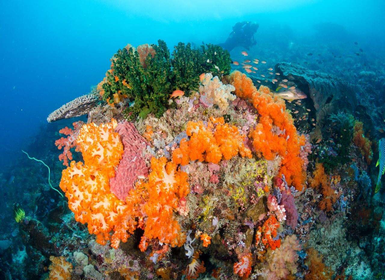 ORCA Dive Club Flores - Labuan Bajo - Orca