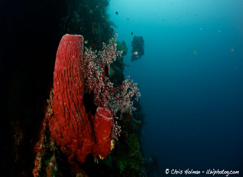 ORCA Dive Club Lovina