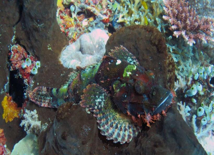 Sali Bay Dive Centre