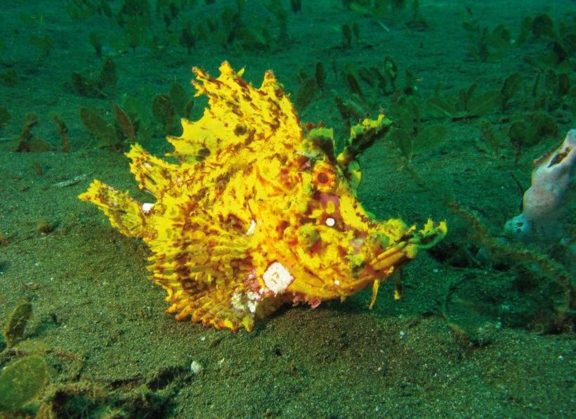 Siladen Dive Center