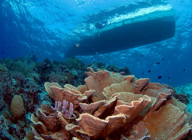 Wakatobi Dive Center
