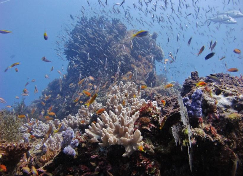 Odyssea Dive Vilanculos