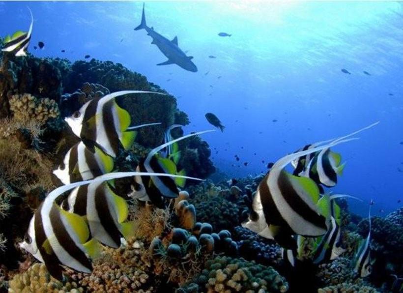 © Top Dive / Tahiti Nui Travel