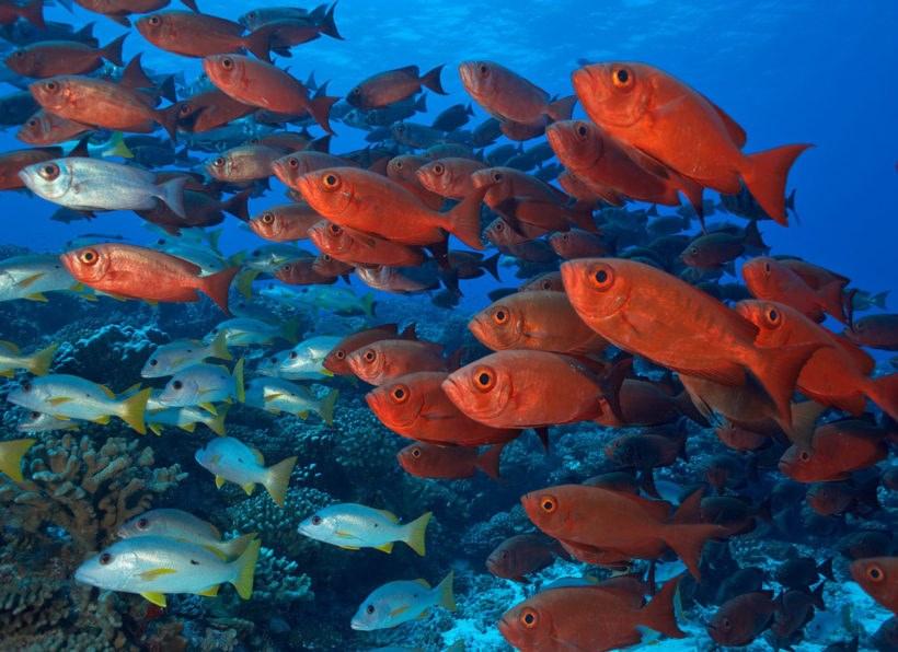 © Copyright Eric H Cheng – http://echeng.com (Tahiti Nui Travel/Top Dive)