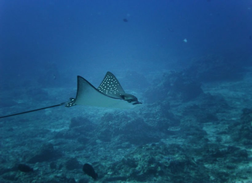 Devocean Divers