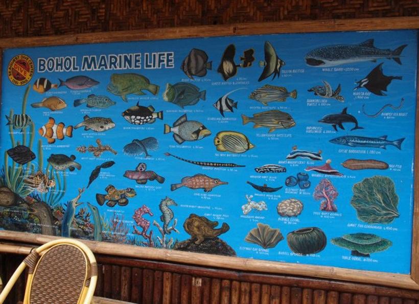 Seaquest Dive Center