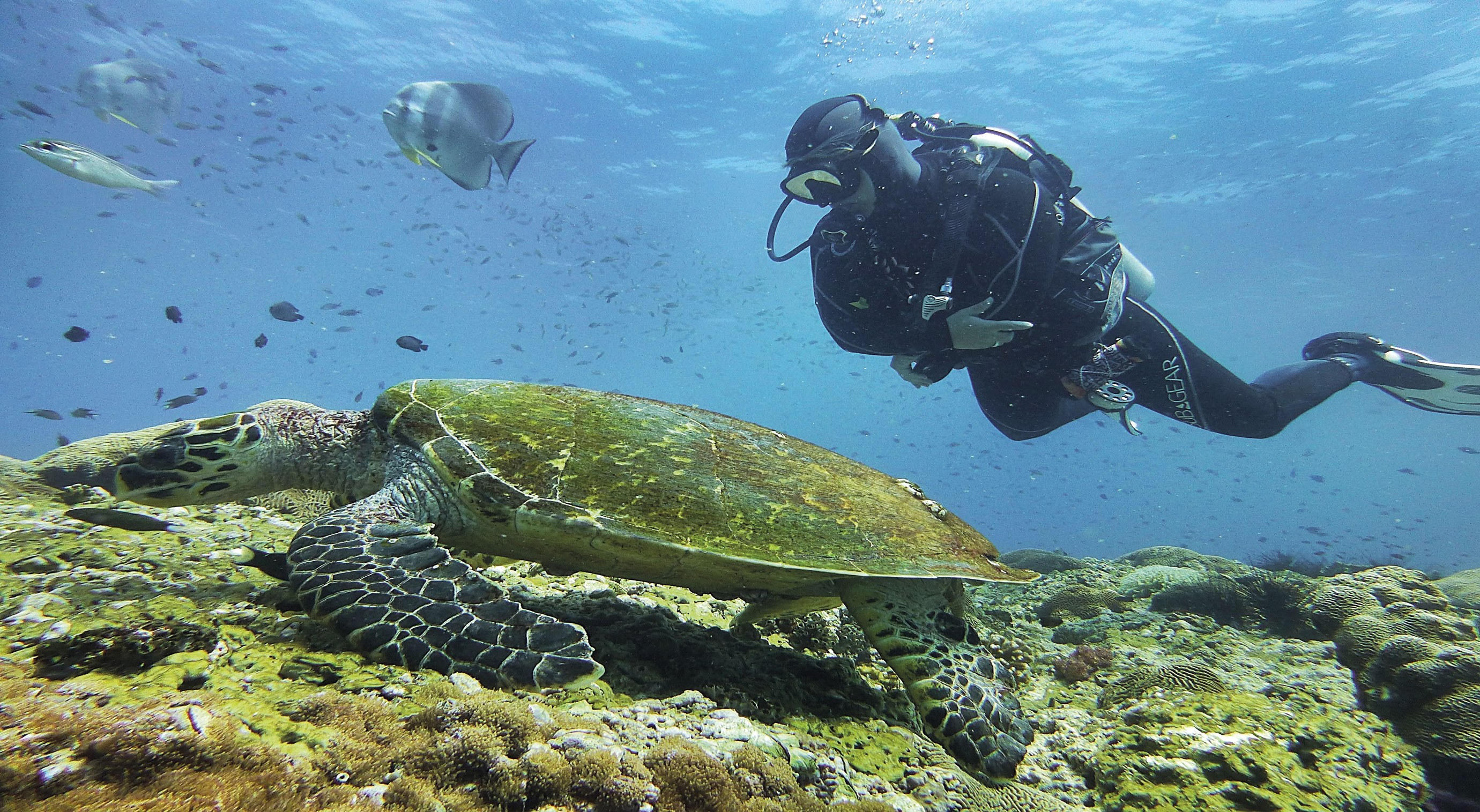 Unsere Mitarbeiterin Birgit war im Oman tauchen. Hier am Riff mit einer Schildkröte