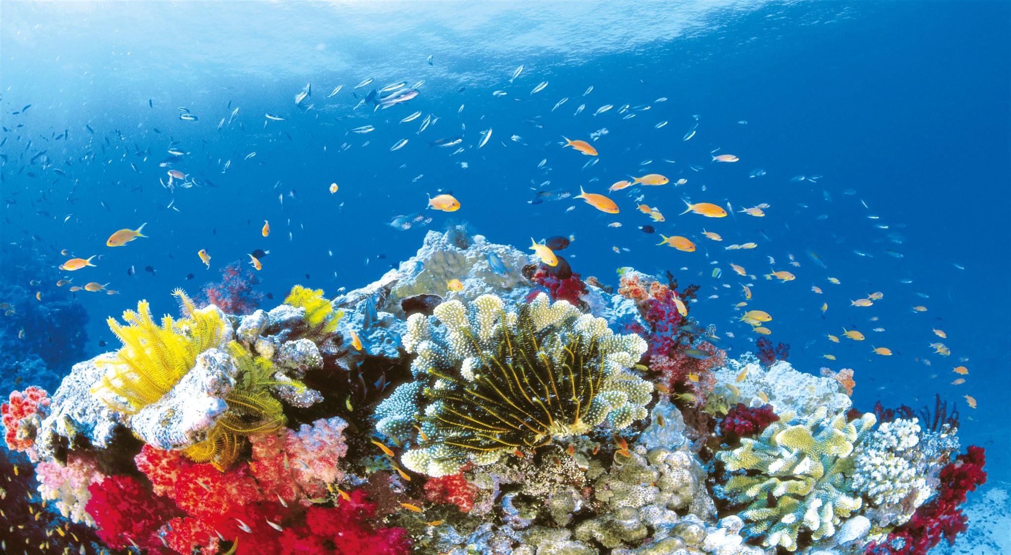 Ein MUSS wenn man in Australien Tauchen geht: das Great Barrier Reef