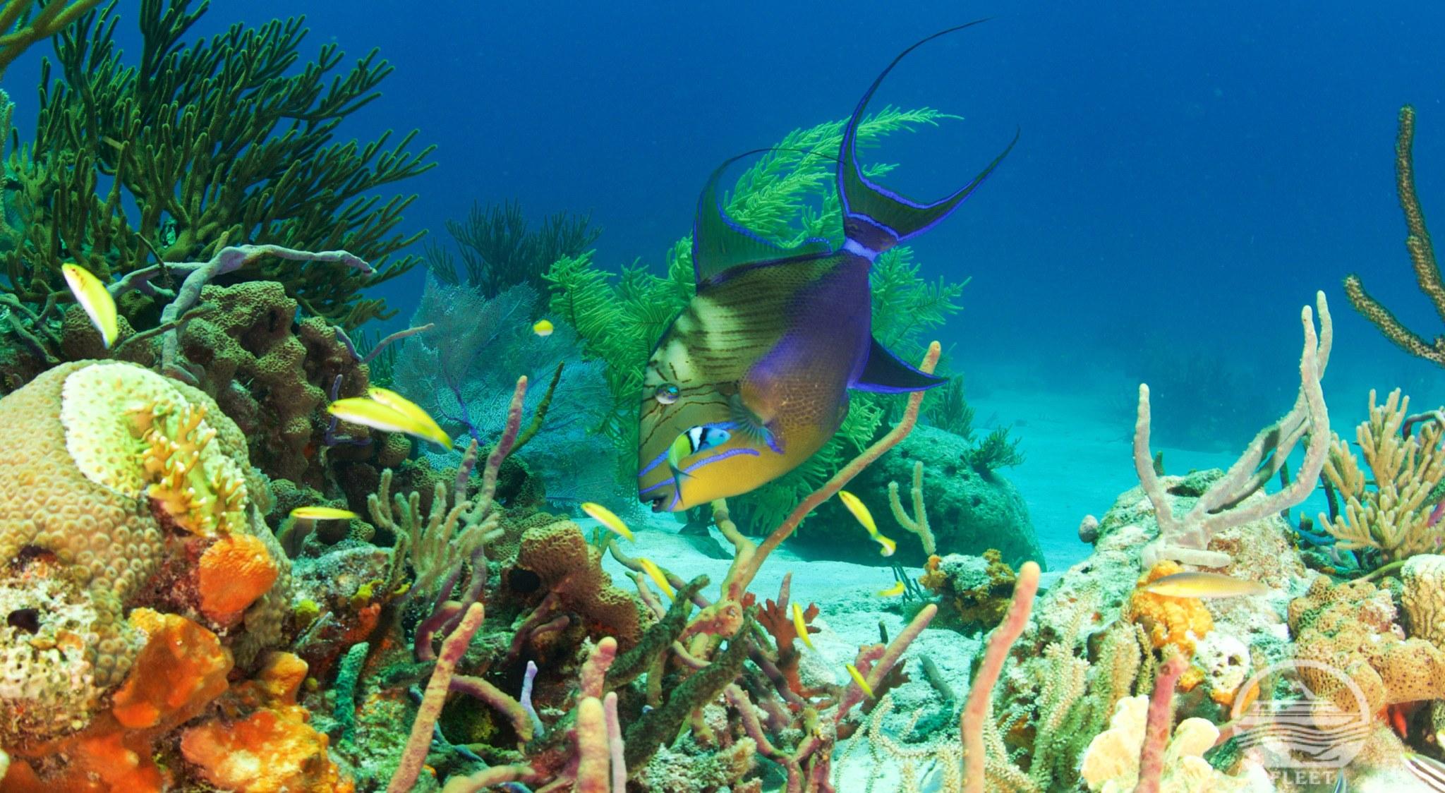 Solch bunte Riffe sehen Sie nur, wenn Sie auf den Bahamas tauchen