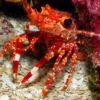 © Stuart Cove's Dive Bahamas
