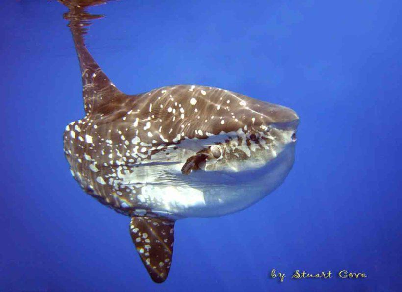©Stuart Cove's Dive Bahamas/by DSC User