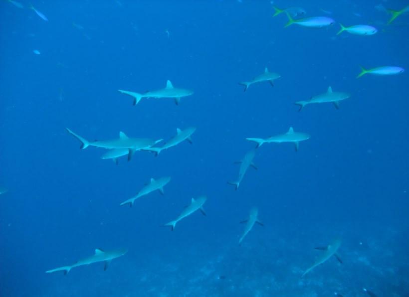 Fish n Fins