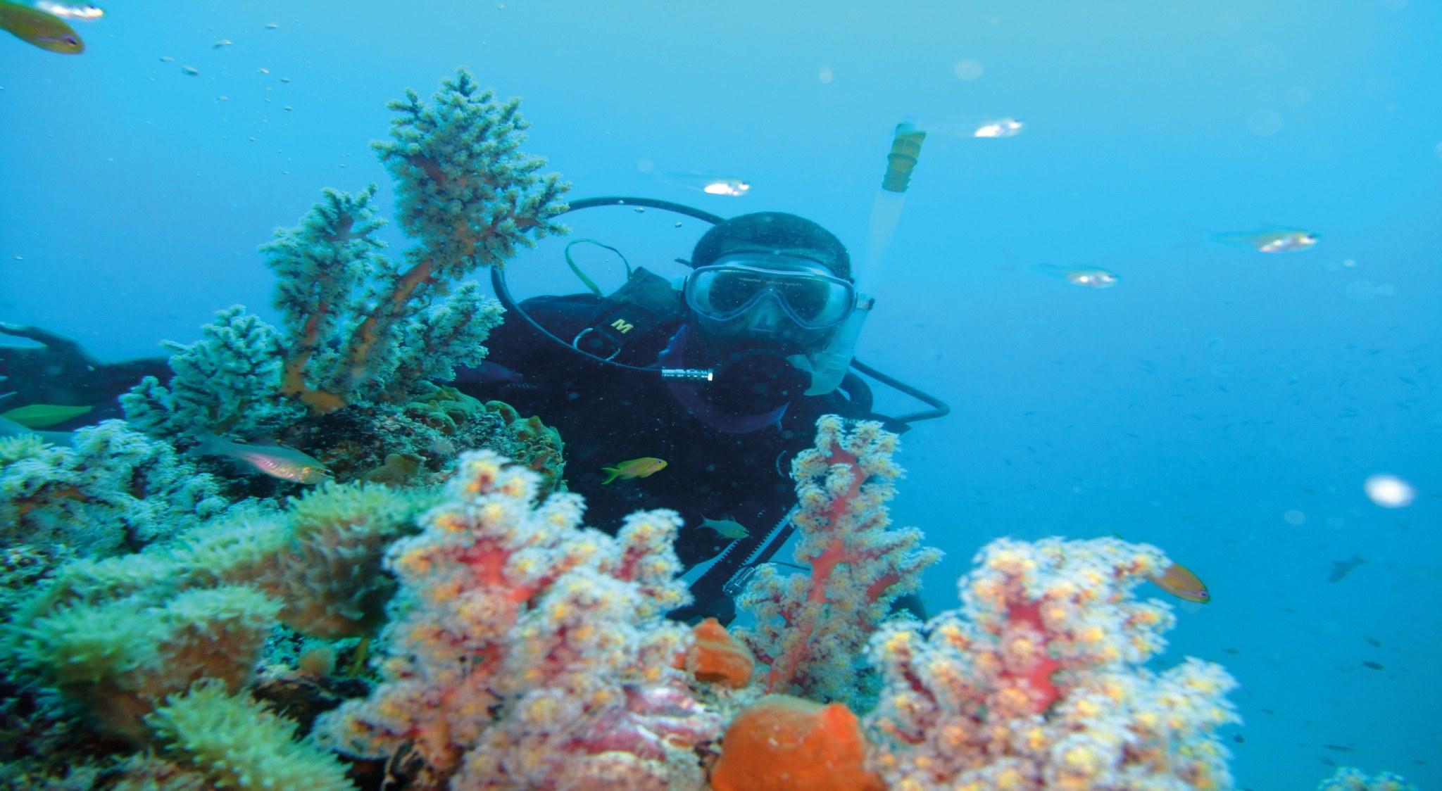 Aufnhame eines Tauchers am Riff, der in Kenia tauchen war