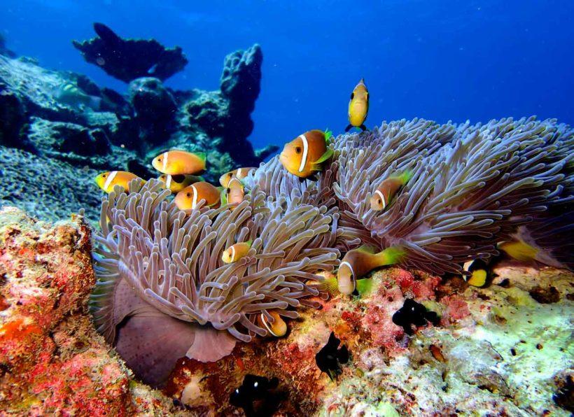 Euro Divers Eriyadu Riff