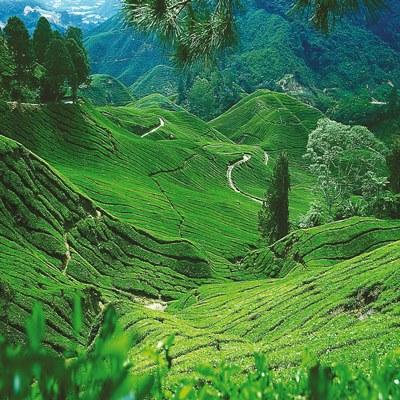 Malaysia Highlands - Das grüne Herz des Landes