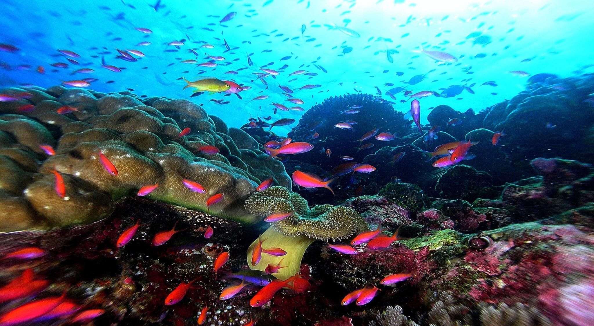 Tauchen in Malaysia bedeutet Bunte Riffe und dichte Fischwärme