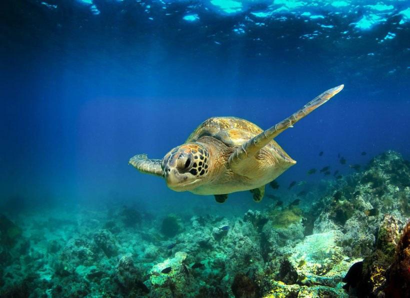 Muscat Hills Dive Center