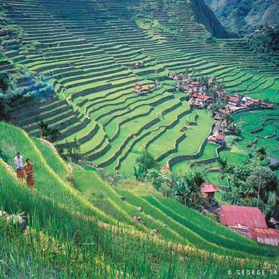 Reisterassen umgeben ein Dorf auf den Philippinen