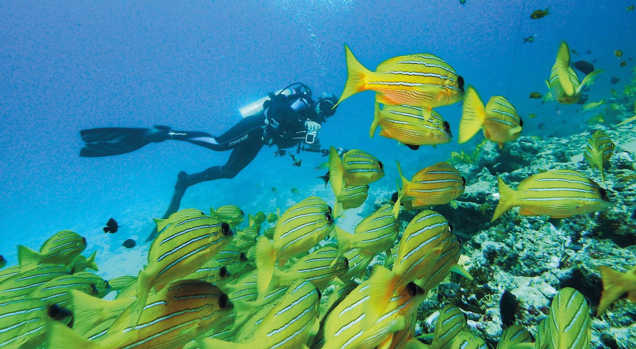Fischschwarm beim Tauchgang als wir auf den Seychellen tauchen waren