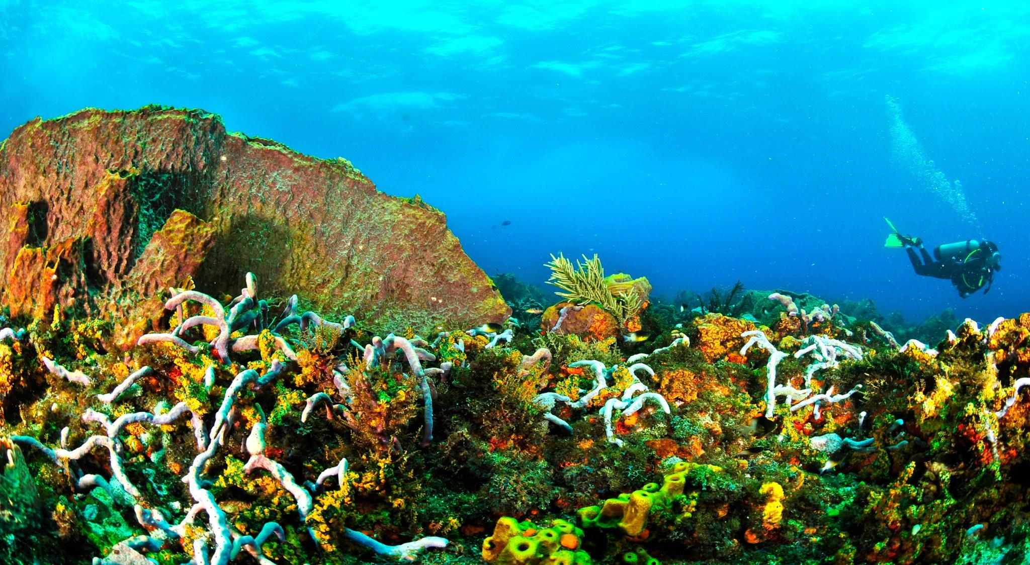 Das bedeutet auf Tobago Tauchen: Glasklares Wasser und bunte Riffe