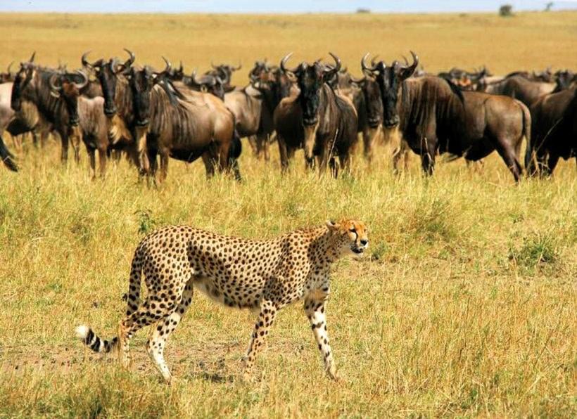 Naturwunder Tansanias