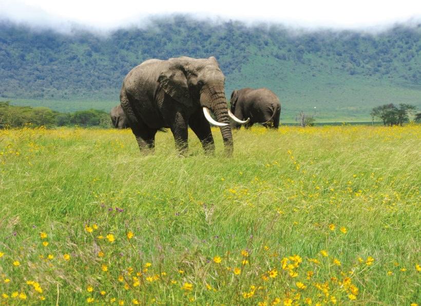 Naturwunder Tansanias_Ngorongoro Krater
