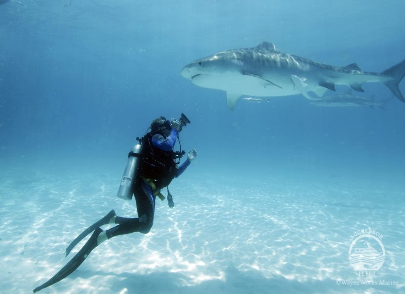 Bahamas Aggressor