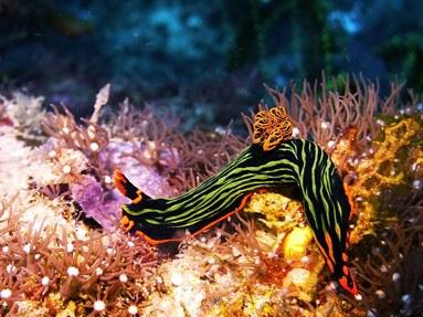 Philippinen Reisebericht: Nudibranch