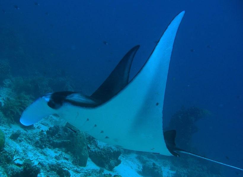 Extra Divers Nabucco Island