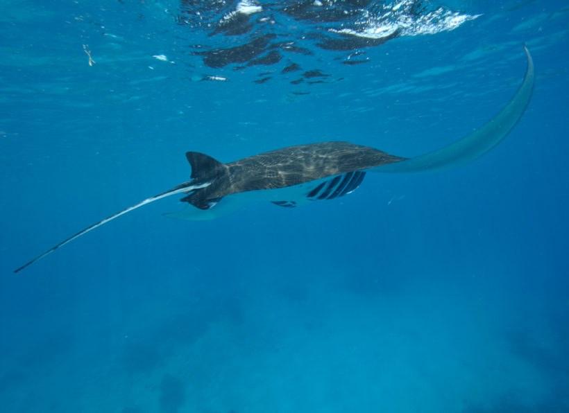 Extra Divers Nunukan