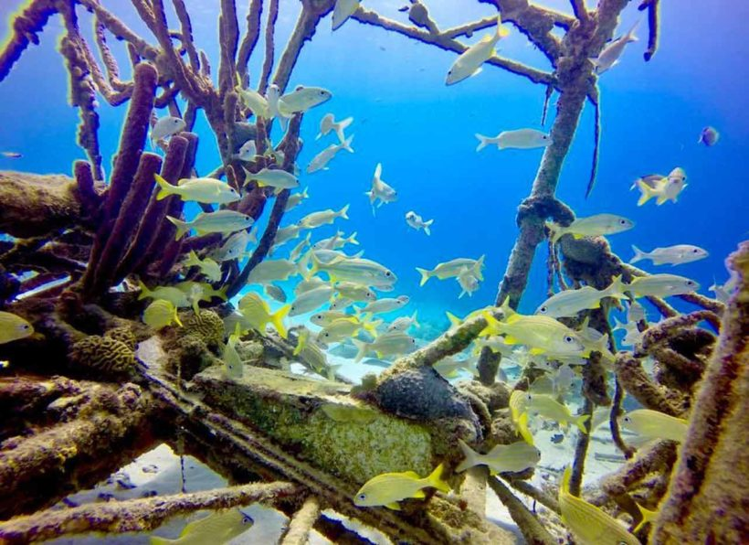 AN_Dive_n_Curacao_Fische_gelb