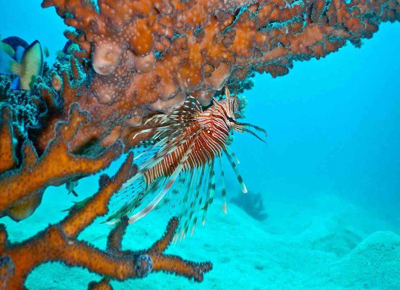 Kawayan Holiday Divers
