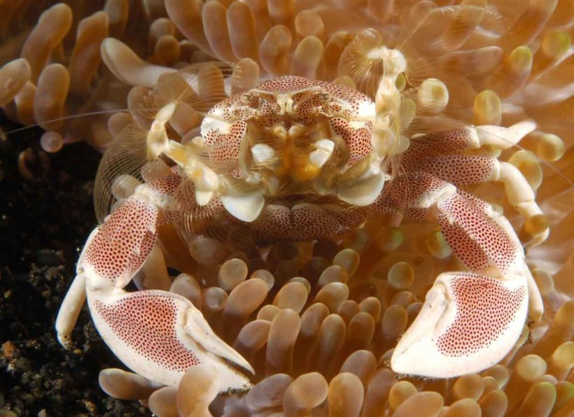 Dive Into Lembeh