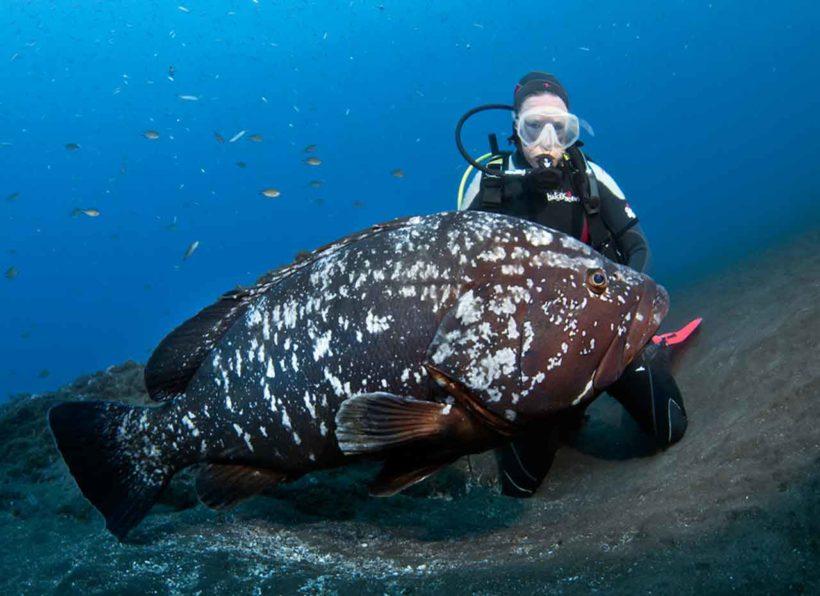 Manta Diving Madeira