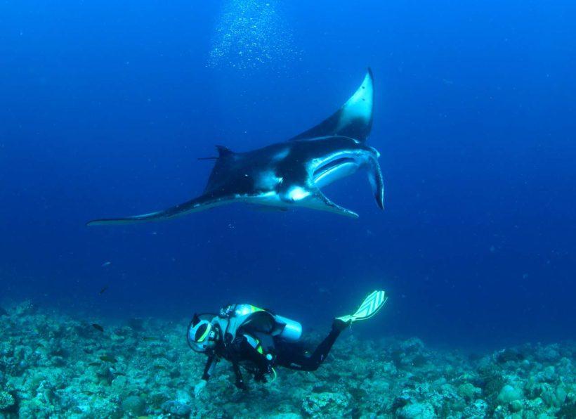 Mirihi Ocean Pro Diving Taucher