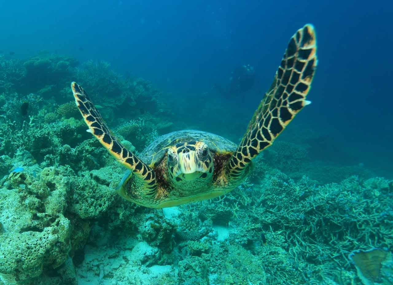 Mirihi Ocean Pro Diving Tauchompressionen Schildkroete