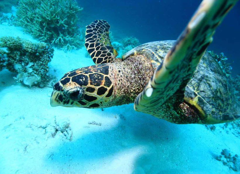 Mirihi Ocean Pro Diving Tauchompressionen Schildkroete2