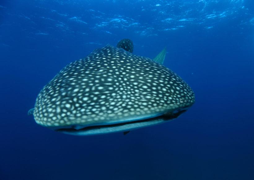 Mirihi Ocean Pro Diving Tauchimpressionen 2