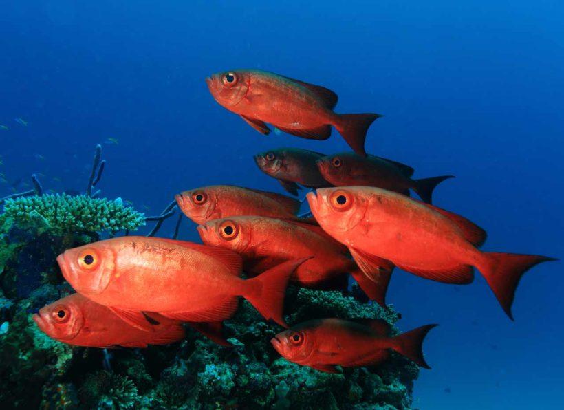 Mirihi Ocean Pro Diving Fische orange